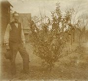 Edgar with fruit tree in Hammond, LA 1890's