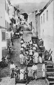 Funchal Madeira in 1907